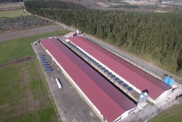 Instalación de autoconsumo en granja Avícola Mosteiro, Lugo - EDF Solar