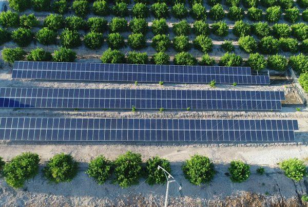 Instalación de autoconsumo fotovoltaico en Agropor Finca Cabezal 2, Murcia - EDF SOLAR