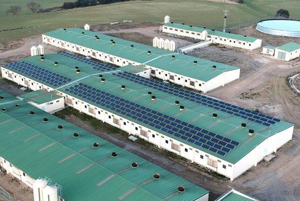 Instalación de energía solar fotovoltaica para autoconsumo en Gradacinca - EDF SOLAR