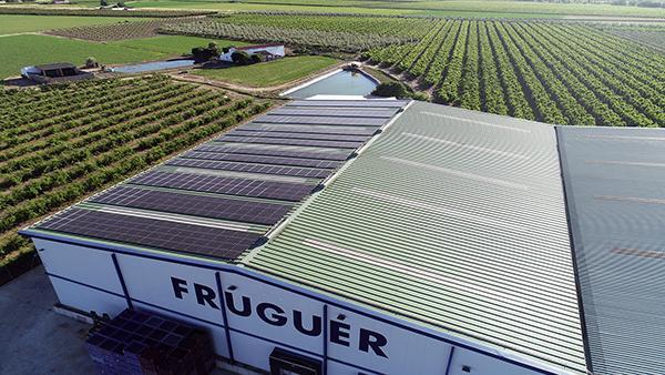 Instalación fotovoltaica autoconsumo Fruguer | EiDF Solar